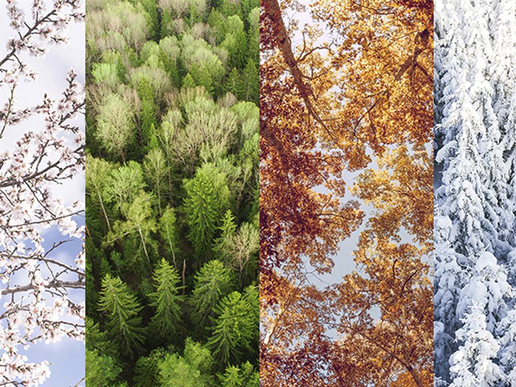 Сезонный или дирекционный: что выбрать?